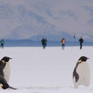 2017 南极马拉松