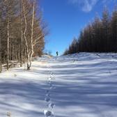 野雪跑赛道