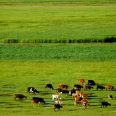 科尔沁草原美景