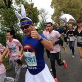 海湾马拉松2:00兔子