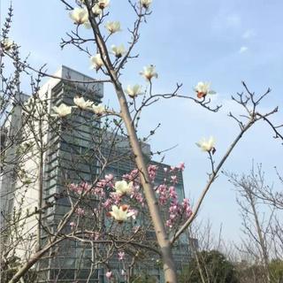 张江6km企业竞跑赛