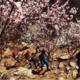 第七届北京三峰连穿国际越野挑战赛 暨2019北京山地马拉松 ---- 第十一届北京市体育大会