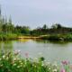 灞桥湿地公园半程马拉松