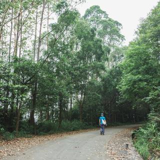 2017凯乐石广州龙洞越野赛