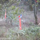 仙灵棋-安泰宫路段下午
