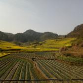 2017年黄山徽州马拉松沿途风景